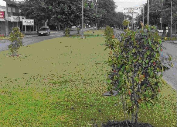FORESTAL-MGA-Reforestacion-08-ENE-2021